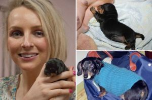 http://www.mirror.co.uk/news/weird-news/britains-first-cloned-dog-born-3390735
